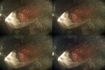 CLST_1707895142.jpg